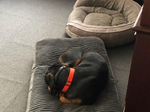 Opie Pet Bed Ed Solors